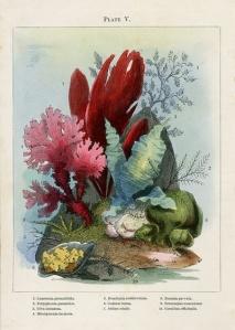 Zeegroenten_Noel Humphrey_Ocean Gardens_1857